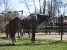 Cu-caii-la-Ghiocelul-2683