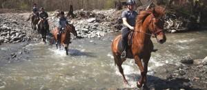 Cu-caii-la-Ghiocelul
